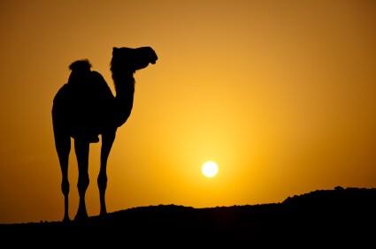 Sahara Aroma
